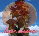 love essence