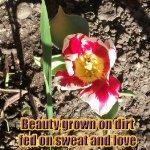 soil to beauty