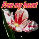 free my heart