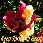 Spring in heart