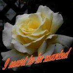 white rose3