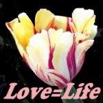 love=life