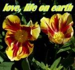love, life earth